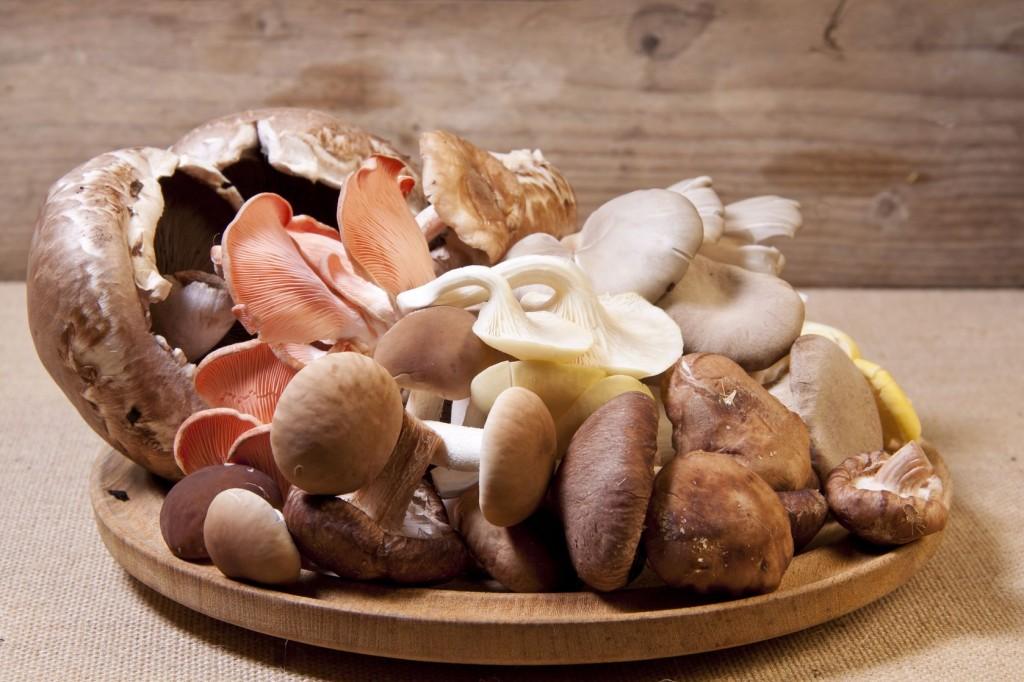 toxinas encontradas em uma variedade de diferentes espécies de cogumelos silvestres